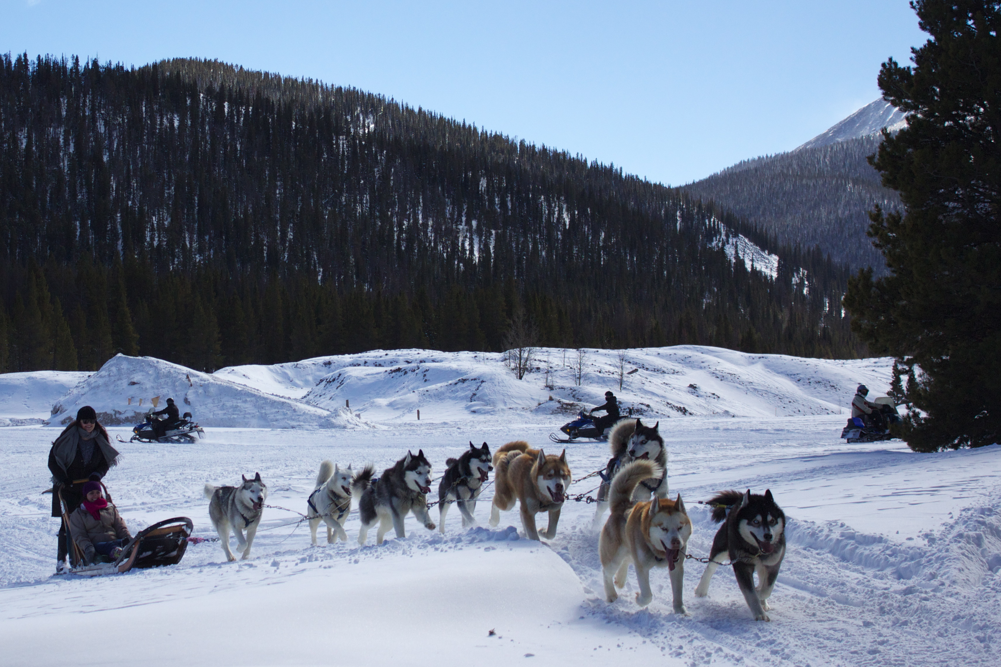 tag archives for dog sledding dog sledding in breckenridge co